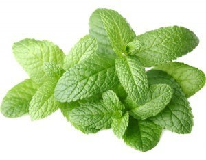 Fragrance oil for pour and melt soap fresh mint